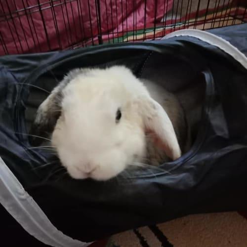 Howlite - Dwarf lop Rabbit