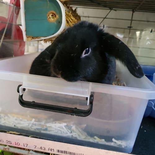 Stewy -  Rabbit