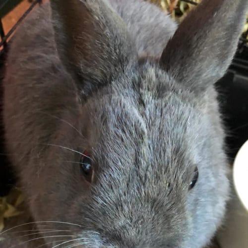 Arnold -  Rabbit
