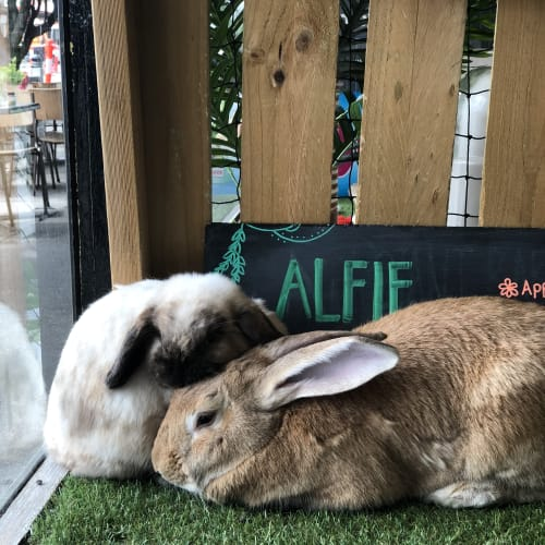 Alfie and Daisy -  Rabbit