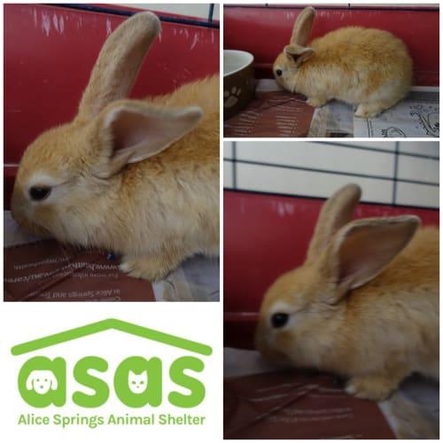 5 gorgeous baby bunnies - Domestic Rabbit