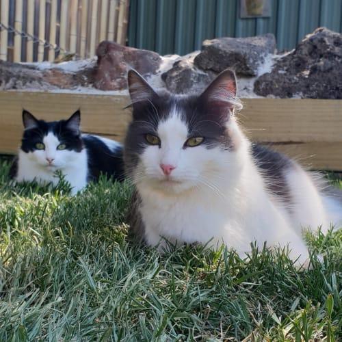 Ruby and Mylady Mollini