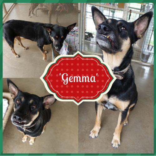 Gemma  DG18-493 - Mixed Breed Dog