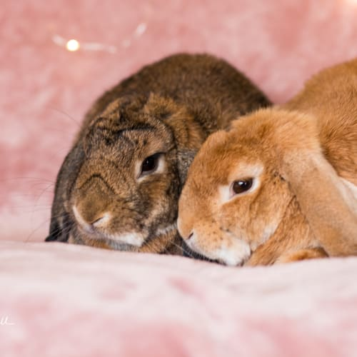 Honey and Sookie -  Rabbit