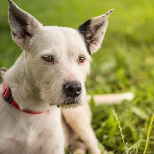 Harriet - Terrier Dog