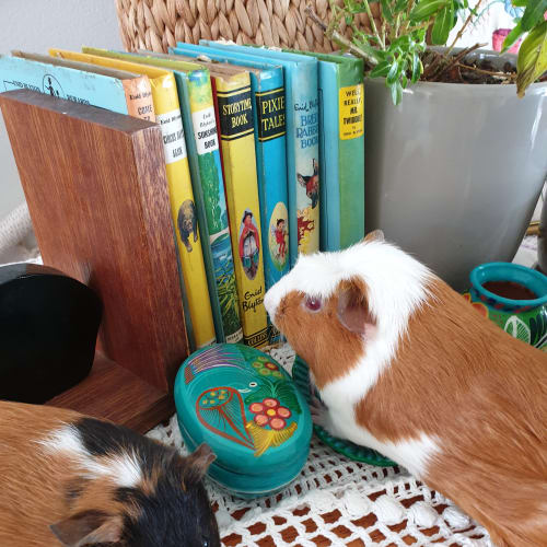 Chief and Pudding -  Guinea Pig