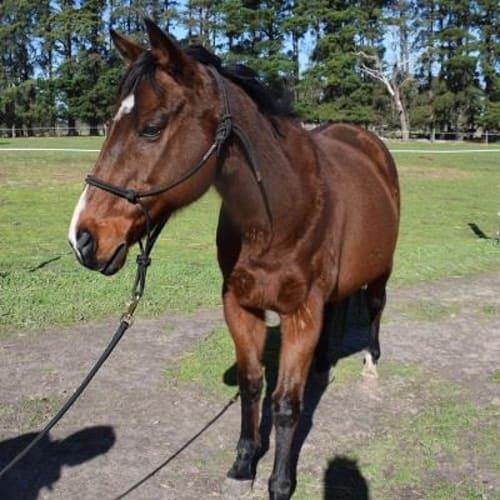 Bear 895018 -  Horse