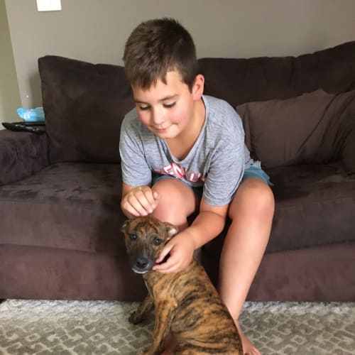 Cosmo  - Johnson Bulldog