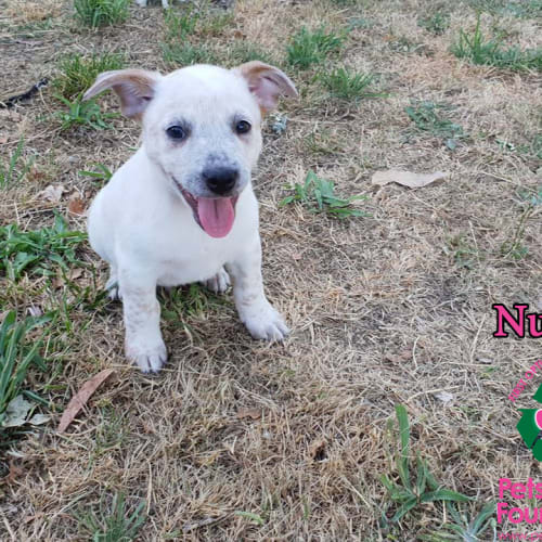 Search Rescue Dogs And Puppies Petrescue