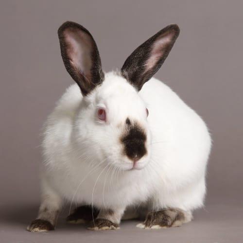 Jenna -  Rabbit
