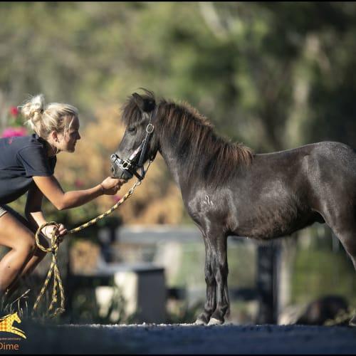 Horse Shepherd Dime -  Horse