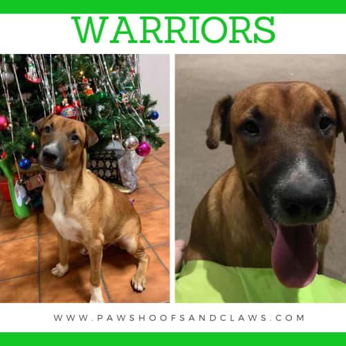 Warriors - Shar-Pei Dog