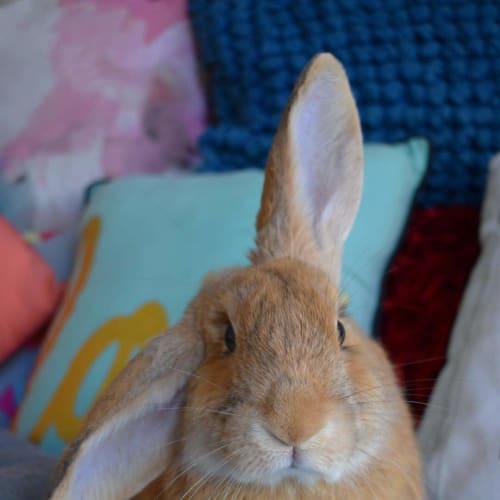 Edward  -  Rabbit