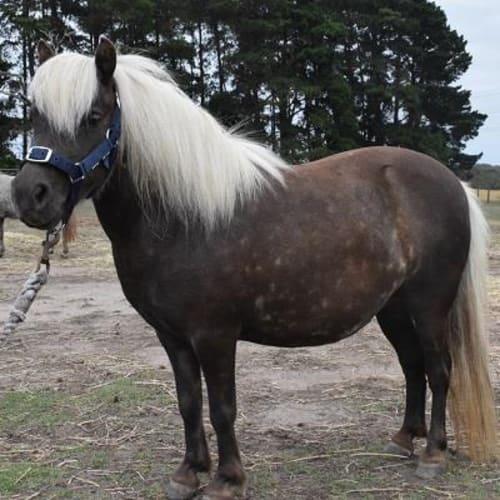 Latte 885112  -  Horse