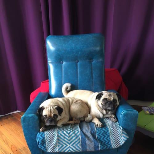 Sunny and Bo - Pug Dog