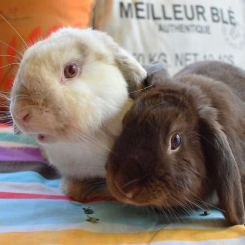Meixy and Hayo - Lop Eared Rabbit