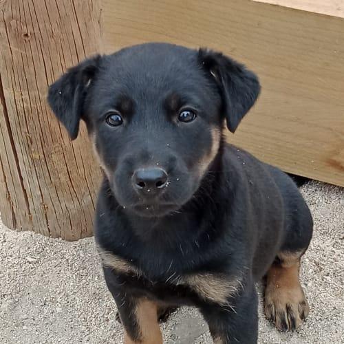 Florence  - Cross breed Dog