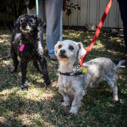 Cece - Maltese X Dog