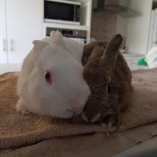 Mouse and Bramble  -  Rabbit