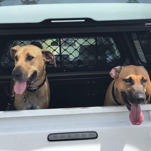 Genna & Django - Rhodesian Ridgeback Dog