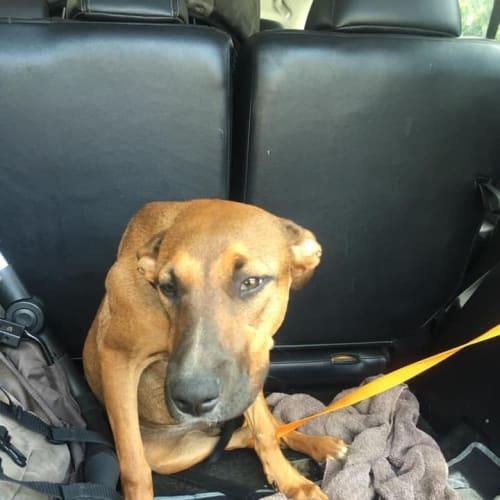 Phoebe - Mixed Breed Dog