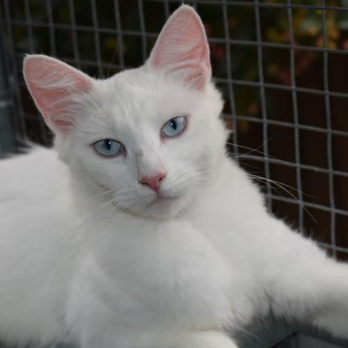 43e3e461eee Search Rescue Pets - PetRescue