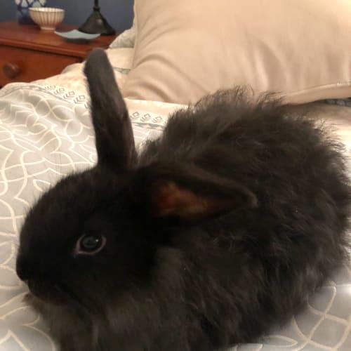 Floofy - Cashmere Rabbit