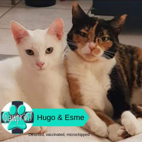 Hugo & Esme - Domestic Short Hair Cat