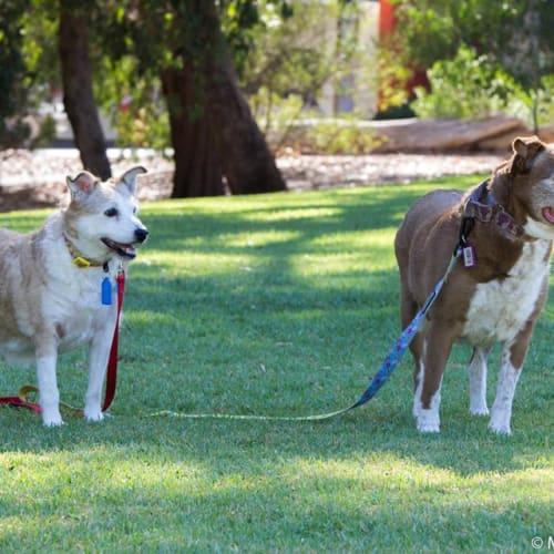 Bitsa &Turbo - Australian Cattle Dog x Cross breed Dog