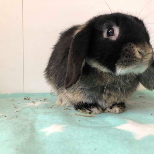Jerry Seinfeld  - Domestic Rabbit