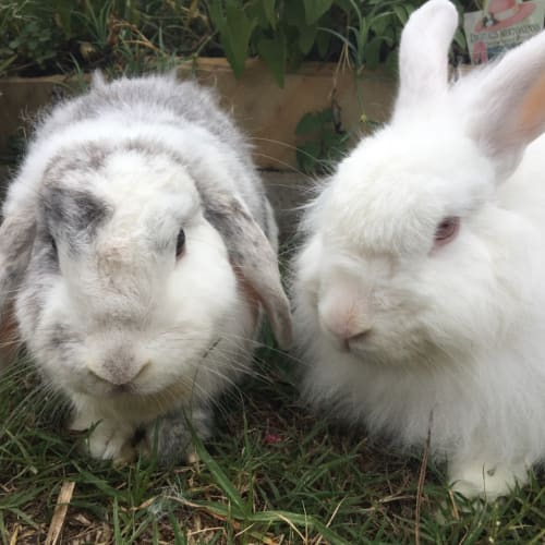 Fluffy & Lola - Cashmere Rabbit