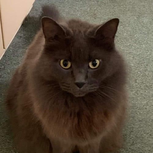 Sammy & Charlie - Ragdoll Cat