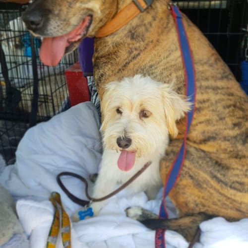 Boof & Ollie - Mixed Breed Dog