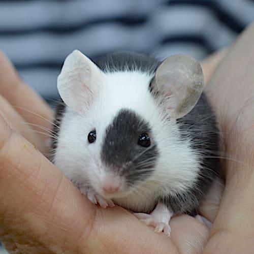 Bracken -  Mouse