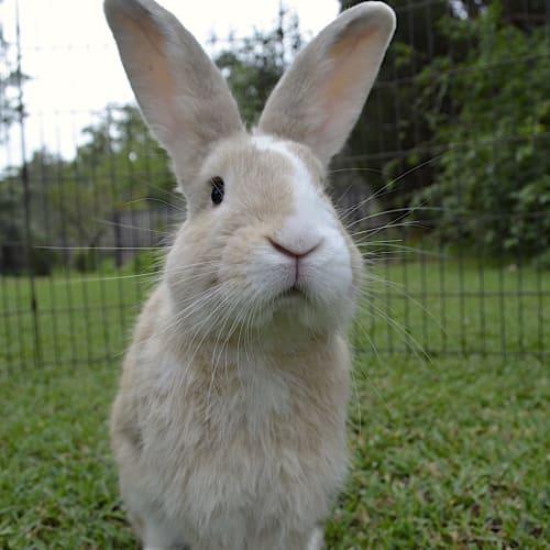 Seymour -  Rabbit