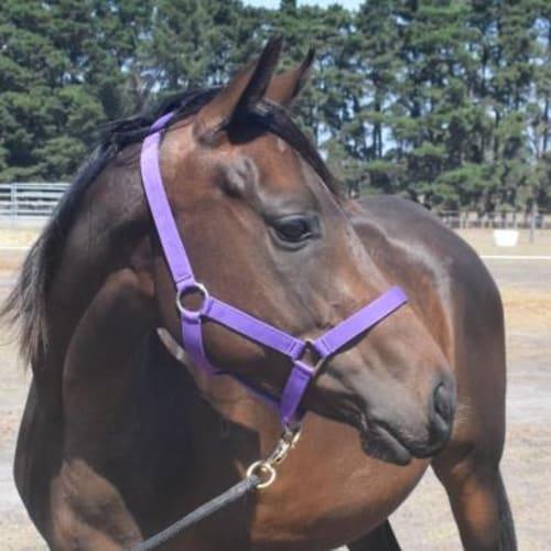 Pippa  909220 -  Horse