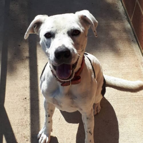 Patch - Mixed Breed Dog