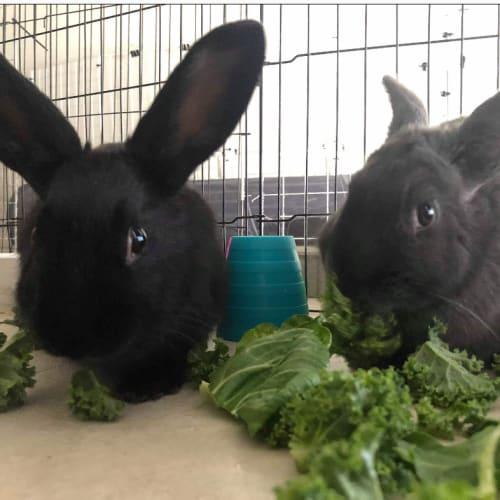 Ebony and Evita -  Rabbit