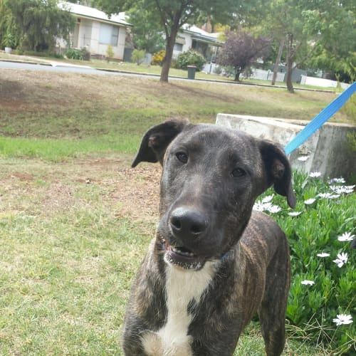 Mr Chance  - Mixed Breed Dog