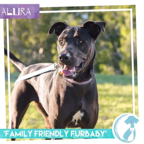 Allira - Mixed Breed Dog