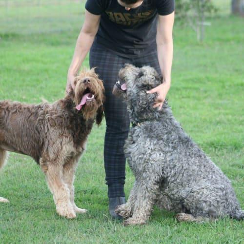 Mia and Cinnamon - Golden Retriever Dog