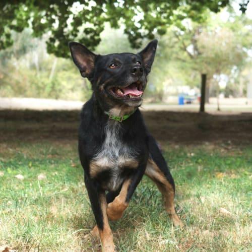 Search Rescue Pets - PetRescue