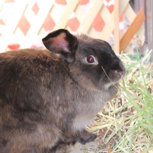 Mama - Domestic Rabbit