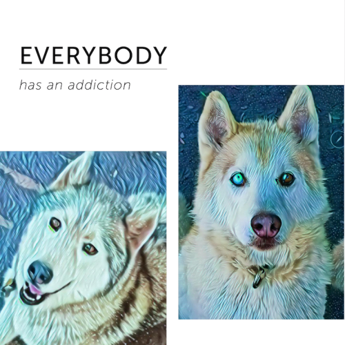 ❤🐺Hercules and Dash🐺❤ - Siberian Husky Dog