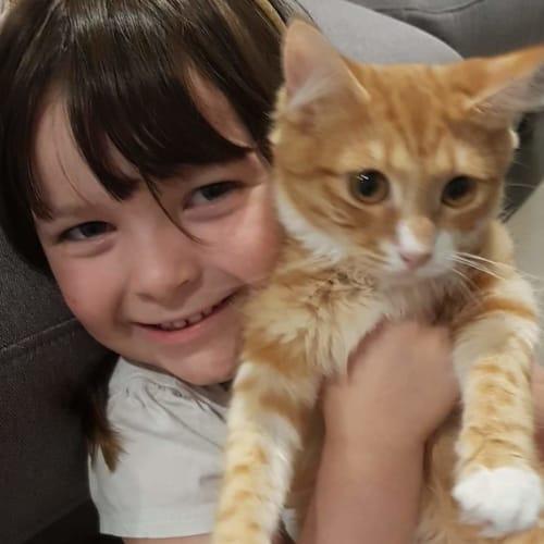 Franklin - Domestic Medium Hair Cat