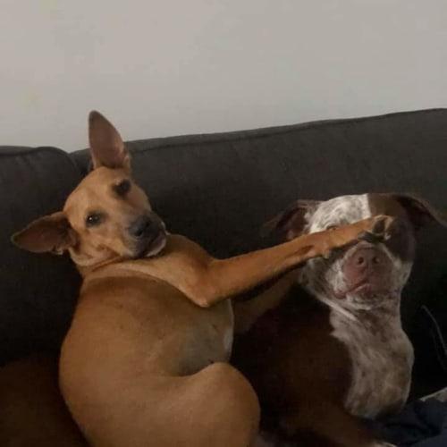Lexi - Mixed Breed Dog