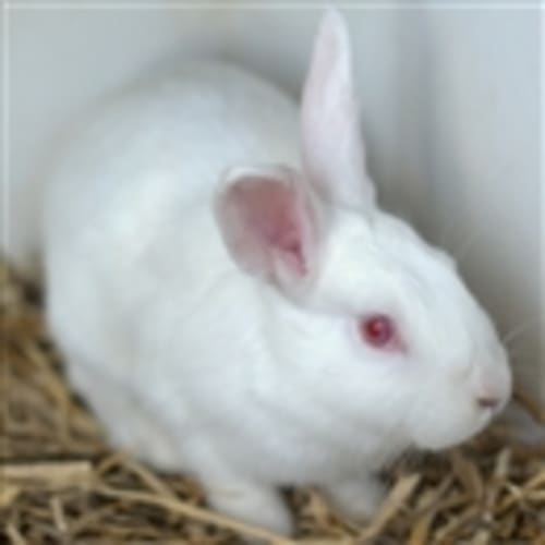 Moo - Bunny Rabbit