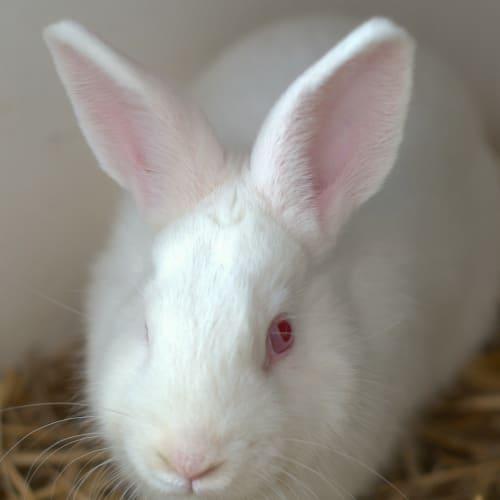 Marble - Bunny Rabbit