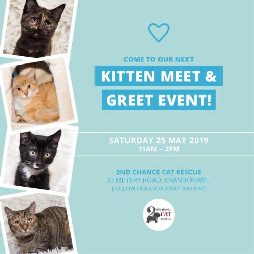 Mellow Puff **2nd Chance Cat Rescue** - Domestic Medium Hair Cat