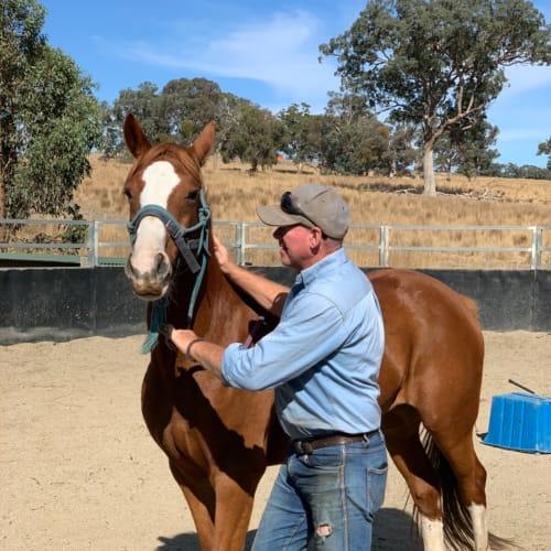 """Arab x """"Symmie"""" -  Horse"""